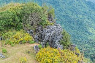 doi pha tang - thailande 34