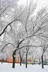 winter flora (sunsetsára) Tags: weather winter winterbeauty snow snowy ice icy tree trees fog foggy mist misty pastel white cool frozen gloomy branch branches walking walk street town city