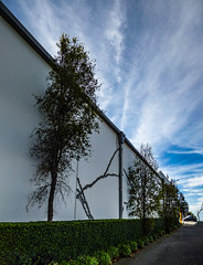 Many Trees (Steve Taylor (Photography)) Tags: cracks filler repair eathquake quake damage hedge surreal art digital wall path road blue green white concrete newzealand nz southisland canterbury christchurch city tree trees perspective cloud sky