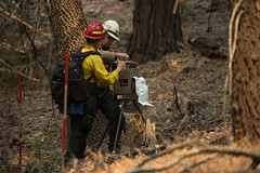 "29284936762_6e06ed83f6_o (Forest Service Photography) Tags: usdepartmentofagriculture unitedstatesdepartmentofagriculture usda""departmentofagriculture"" forest nationalforest fire wildfire wildland forestfire cedar usforestservice fs forestservice unitedstatesforestservice kernville lakeisabella kernriver tularecounty kerncounty bakersfield posey panoramaheights sugarloaf california ca ponderosa treemorality pinesequoiaredwood adaptivemanagementservicesenterpriseteam amset firebehaviorassessmentteam fbat"