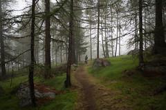 Easy Hiker® (Toni_V) Tags: m2404907 rangefinder digitalrangefinder messsucher leica leicam mp 28mm elmaritm12828asph hiking wanderung randonnée escursione mattertal randa hängebrückeranda charleskuonenhängebrücke fog nebel mist trail wanderweg sentiero wood forest wald summer sommer alps alpen wallis valais oberwallis switzerland schweiz suisse svizzera svizra europe ©toniv 2017 170812