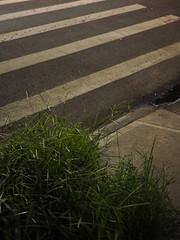 Night Crosswalk (Matthew Cumbie) Tags: night crosswalk grass street urban graphic abstract olympus 20mm lumix