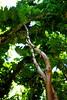 Jungle Vine (Jenna Stirling) Tags: hawaii maui nature explore wild blowhole ocean nakalele flora vine tree