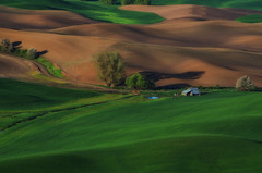 dawn in the Palouse (Kelly Renée) Tags: palouse photocentrictravels steptoe washington barn farm farming landscape light shadows travel trees