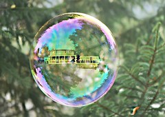 Smile on Saturday!:)  Bubbles (nushuz) Tags: bubbles pinetree smileonsaturday myyard reflectionsinthebubble giantbubble rainbowcolors soverycool happysmileonsaturday fallleavesinthepine happyfall dof selfie nikond700 upsidedown explore