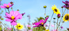 Roadside flowers (Wouter de Bruijn) Tags: fujifilm xt1 fujinonxf35mmf14r flower flowers bokeh nature summer outdoor colourful colorful goereeoverflakkee zuidholland nederland netherlands holland dutch