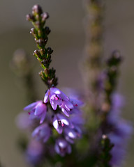 Heather (Ashild Andrea) Tags: blefjell mountain outdoors autumn fjell moss lichen heather lyng mose myr skog
