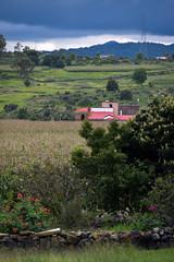 Neighbor (jiturbe) Tags: corn field maiz sembradio montañas nubes clouds campo aculco mexico green verde casa house rosas roses