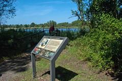 Terrapin Nature Area, Stevensville MD 23 (Larry Miller) Tags: naturepark conservation chesapeakebay maryland 2017