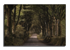 Allée (Nickerzzzzz - Thanks for stopping by :)) Tags: ©nickudy nickerzzzzz theartofphotography wwwdigittaliacom canoneos70d efs1585mmf3556isusm photograph landscape colour forest trees road mystical wood allée avenue