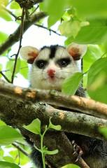 Visitinha de hoje ❤️ (Paulo Mattes) Tags: animais animal animales animalplanet globo natgeo naturelovers natureza nature brazil canon canont5i flickr selvagem