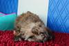 Sleepy puppy (SarahPaigexx) Tags: puppy cute pet petportrait dog sweet cutie cutedog love sand sea