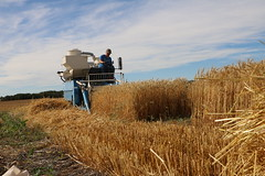 Applied Research Harvest 2017 (Lakeland College) Tags: lakeland college applied research team harvest group school equipment plot trials truck leading leaning ever excel seed flax pulses soybean weed control projects
