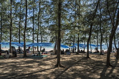 sattahip (Roberto.Trombetta) Tags: tree forest park shadow people tourist beach summer picnic sand sattahip eating bag lunch man woman girl boy children play sea ocean swell big wave water sony alpha 7rm2 7rii batis225 carl zeiss batis 25 fine art fineart mare oceano persone asia thailand coast thai