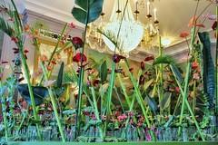 🎼Jungle Fever🎶#jungle #junglestyle #jungleplants #bloemkunst #flowerart #kasteelgroeneveld #castle #flower #flowers #flowerphotography #nature #natuur #lovephotography #photographer #photography #fotograaf #fotografie #inside #chique # (Chantal vander Reijden) Tags: chique fotografie flowerphotography flower lovephotography jungle photography flowerart bloemkunst inside junglestyle castle natuur nature jungleplants photographer fotograaf flowerpower kasteelgroeneveld flowers