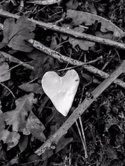 White heart petal (lauraknowles4) Tags: iphone white black sticks petal woods