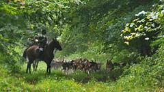 Venerie (Phil du Valois) Tags: venerie veneur piqueux meute chasse forêt domaniale compiègne