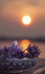 (donna leitch) Tags: bowl tabletop sunset lake reflection sun stilllife purple flowers dof