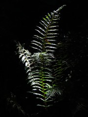 Fern Light (gallftree008) Tags: knocksedanbridge thejackolinearpark brackenstownreservoir thewardriver rivervalley swords codublin ireland knocksedan bridge the jacko linear park brackenstown reservoir ward river nature naturesbeauties naturescreations county co dublin dub eire eireann effect fingal canon caves jaggedcaveviews jaggedcaveview jackopark pollution shadows shadow shine sun sunshine sunsetmode end summer under old mill arch green fern light diagonal polluter dog pink red thebestofbeautifulearth tree trees water lake bushes bush arty artyfarty farty