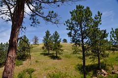 _DSC1443 (cklingenberg) Tags: south dakota windcave blackhills custer state park