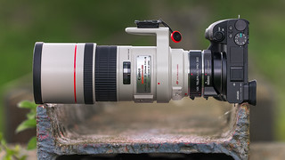 SONY ⍺6500 with Canon EF300mm ƒ/4L IS USM & Kenko 1.4x Teleplus Pro 300 DGX on Metabones T Mark IV