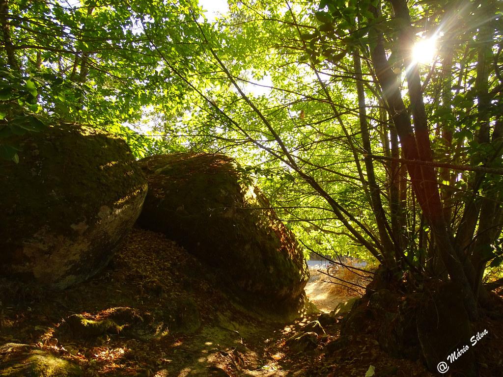 Águas Frias (Chaves) - ... o sol espreitando por entre a folhagem ...