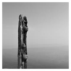 Les rides (Pascal.M (bong.13)) Tags: ventoux vaucluse d3200 noiretblanc nikon blackandwhite bois zen france provence minimalisme