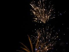 White star flowers (seikinsou) Tags: brussels belgium bruxelles belgique summer nationalday independenceday festival publicholiday fireworks firework