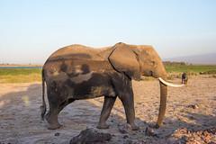 DSC_0257 (stacyjohnmack) Tags: africa kenya amboseli amboselinationalpark amboselli elephant safari