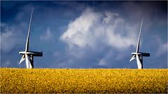 Synchronicity of Hearts melt (Beppe Rijs) Tags: fjord landschaft natur landscape nature wolken wolkendecke field feld gras horizont horizon clouds farbig colored line linie rural ländlich pastell fertile fruchtbar freshly frisch color farbe acker blue blau yellow gelb vivid lebhaft denmark dänemark samsö island insel wheat weizen