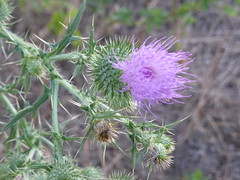 Flora for...Fridays!! P1030007 (amalia_mar) Tags: flowers flora friday 7dwf