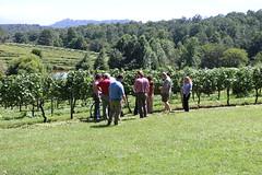 File326 (UGA CAES/Extension) Tags: grapes ugaextension cranecreekvineyards wine viticultureteam viticulture northgeorgiavineyards vineyards vines georgiawine uga