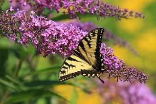 Beautiful summer colors