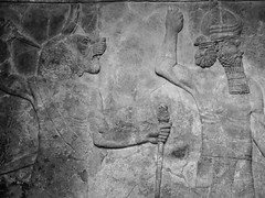 Assyrian Galleries-British Museum (Chris Draper) Tags: lion monochrome blackandwhite assyria assyrian sculpture reliefs museum archaeology britishmuseum carved carving carvedpanel stone mythical mythology culture ancientculture
