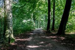 Berner Wald (p.schmal) Tags: panasonicgx80 hamburg farmsenberne bernerschloss schlosspark