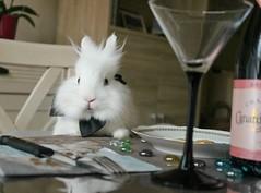 IMG_8953(3) (M.Aurélie.Photographie) Tags: gentleman lapin blanc bunny