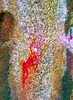 DSC07608 - NAMIBIA 2017_lab (HerryB) Tags: 2017 southafrica afrique afrika namibia namib südwest sonyalpha77 sonyalpha99 tamron alpha sony bechen heribert heribertbechen fotos photos photography herryb rockart rockpaintings peintures rupestres peinturesrupestres san zeichnungen felszeichnungen höhlenmalerei paintings bushmen buschmänner dstretch harman jon jonharman enhance falschfarben restauration digitalenhanced enhancement verwitterung granit granite weathering spitzkoppe erongogebirge erongo shaman schamane trance vandalisiert vandalisme vandalism grosfigur therianthrop wasserwesen schwerelosigkeit weightlessness weighless therianthropie