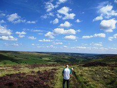 Strolling Through The Heather (chezzah67) Tags: summer walking hot sheep boyfriend bluesky heather hilly green blue clouds