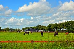 Holland Landscape (JaapCom) Tags: jaapcom landscape landed landschaft clouds fee deer farmhouse holland dutchnetherlands igholland natural