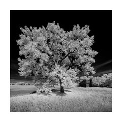 Glory (Sandra Herber) Tags: elva grainelevator infrared manitoba prairies