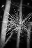 bewitched (courtney065) Tags: nikond800 nature landscapes trees grasses abstract monochrome bw blackandwhite mysterious foreboding shadows depthoffield wetlands