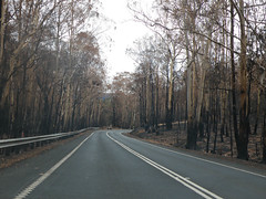 Whittlesea-Yea Road heading towards Flowerdale from Kinglake West; Monday, 16 March, 2009 (Yarra Plenty Regional Library Local History) Tags: fire damage whittleseayea road flowerdale bushfires dickinson collection victorian kinglake west black saturday 2009 blacksaturdaybushfires2009 dickinsoncollection firedamage kinglakewest victorianbushfires whittleseayearoad