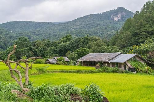 doi inthanon - thailande 67
