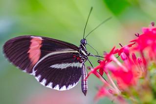 Butterfly feast.