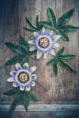 Passion flowers (Ro Cafe) Tags: passionflower stilllife passiflora flowers details nikkormicro105f28 nikond600