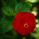Red hibiscus logo of Gianyar