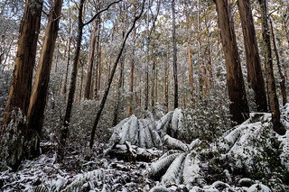 Bush Winter