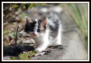 Adorable kitten !