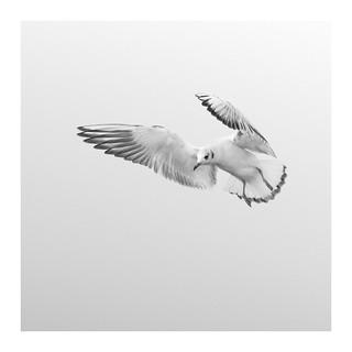 Flight (3)