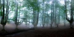 pano fog otzarreta 1 (juan luis olaeta) Tags: photoshop canoneos60d sigma1020 lightroom topaz fog laiñoa brumas briliance bosque forest basoa hayedo panoramicas pano photomerge otzarreta zeanuri bizkaia basquecountry euskalherria